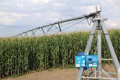 ICONX-Reinke-corn-Nebraska-IMG_2171