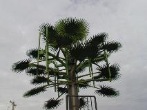 Valmont-India-Telecom-Palm-Tree