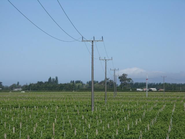 Utility-Distribution-Poles-2-Valmont-India