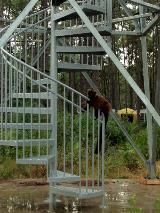 Tampa Galvanizing Lotus Tower Lemur