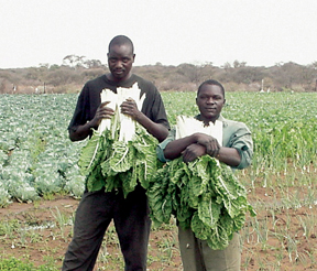 Two growers in Botswana
