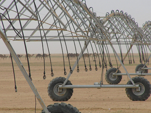 Irrigating in the desert