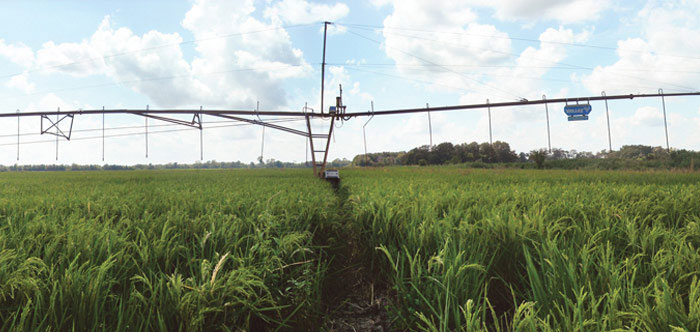 Flotation Solutions for Irrigating Rice