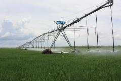 Valley center pivot irrigating rice