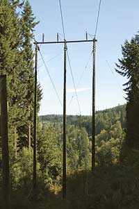 Shakespeare-T-D-Tuff-Pole-Forest
