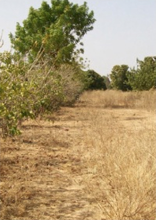 Africa-DryFields