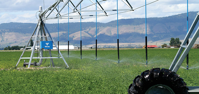 alfalfa production - specialty crop solutions