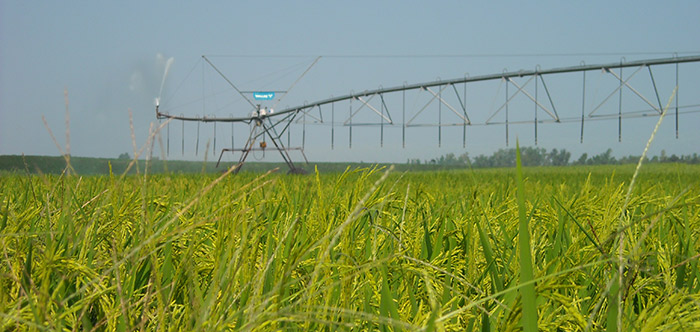 rice production - rice irrigation - specialty crop solutions