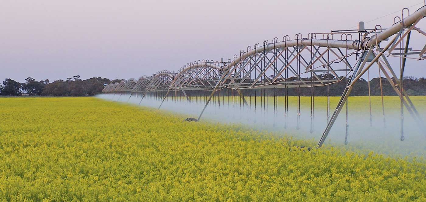 canola crop - center pivot irrigation